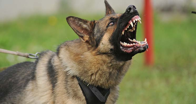 What To Do About Barking Dogs