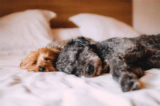 Choose the Right Dog Bed