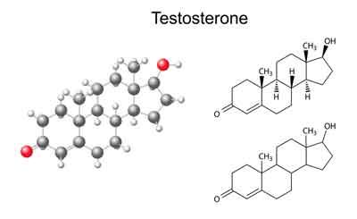 One Day Testosterone Boosting Diet Plan T Boosting Mean Plan